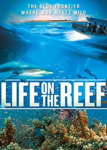 Life on the Reef Ne Zaman?'