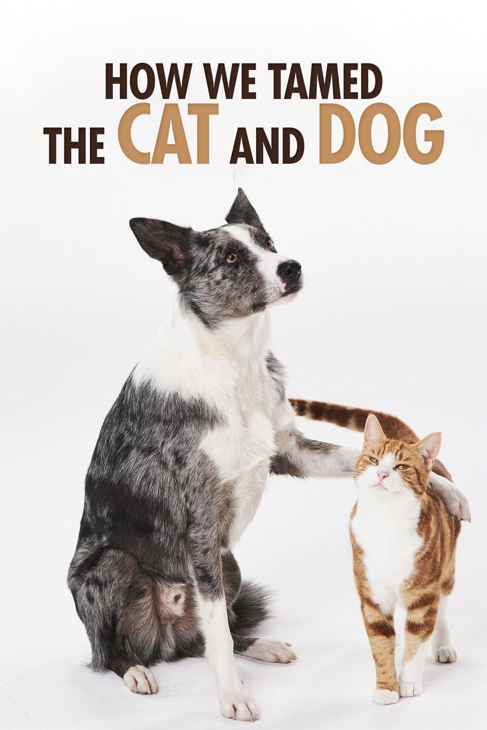 How We Tamed the Cat and Dog ne zaman